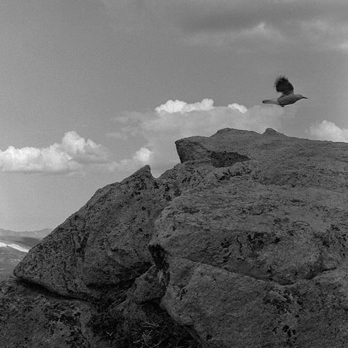 Bird over boulder.  Photo by Steve Rossman/
