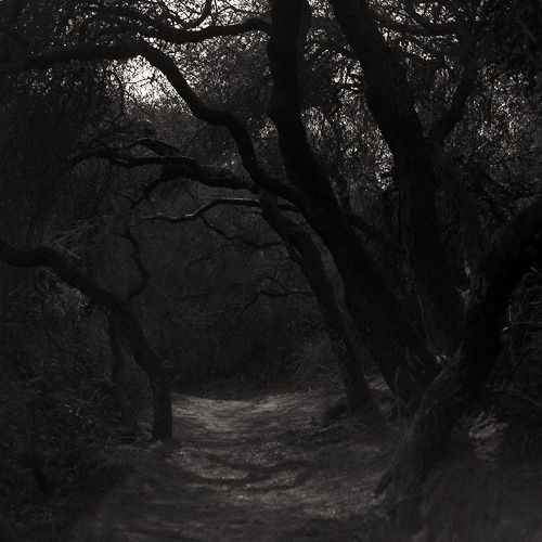 Canopied path at Torrey Pines. Landscape photography by Steve Rossman