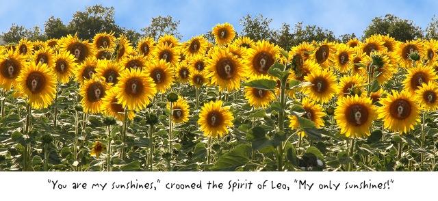 Spirit of Leo - sunshines - A field of lighter Leos