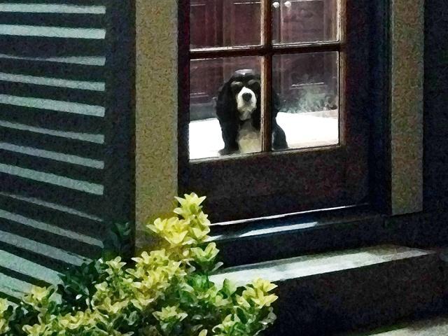 leo at the door-700