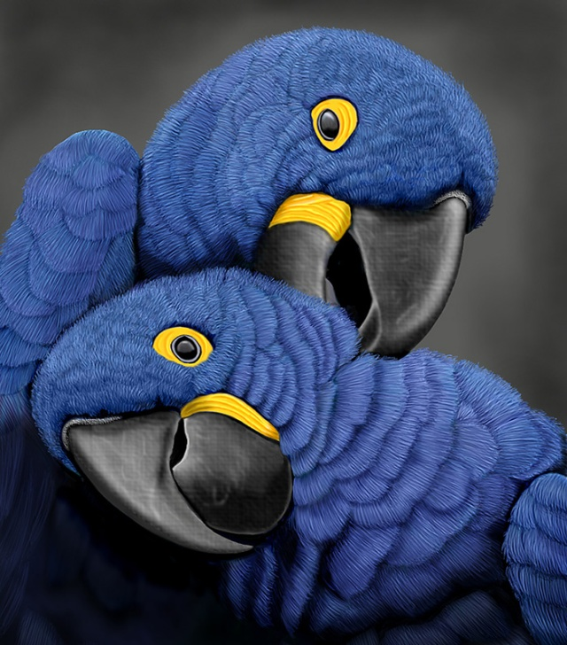 Blue Hyacinth Macaw  Parrots by Paul C. Ross