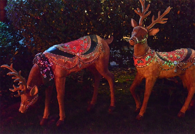 2 reindeer-Night Photography by Steve Rossman
