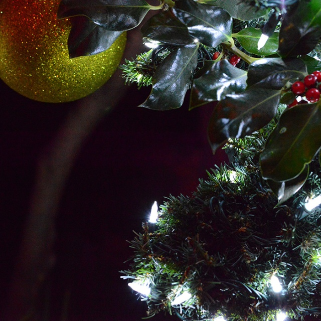 Bough and Ball-Night Photography by Steve Rossman