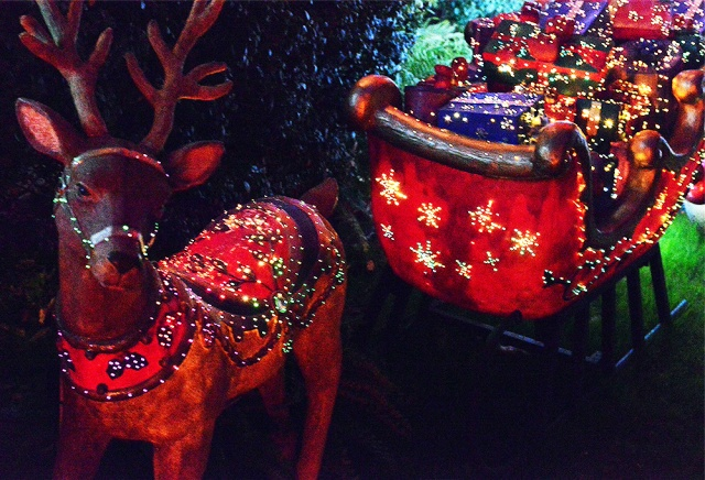 reindeer and sleigh - Night photography by Steve Rossman